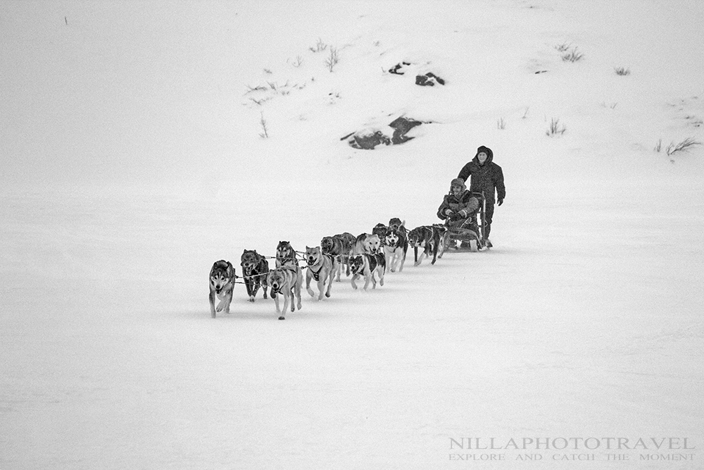 Sweden_Abisko_Dogsledding