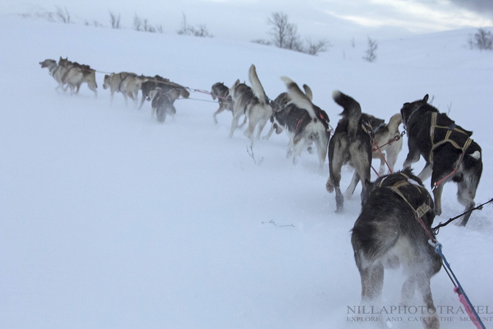 Sweden_Abisko_dogsledding2