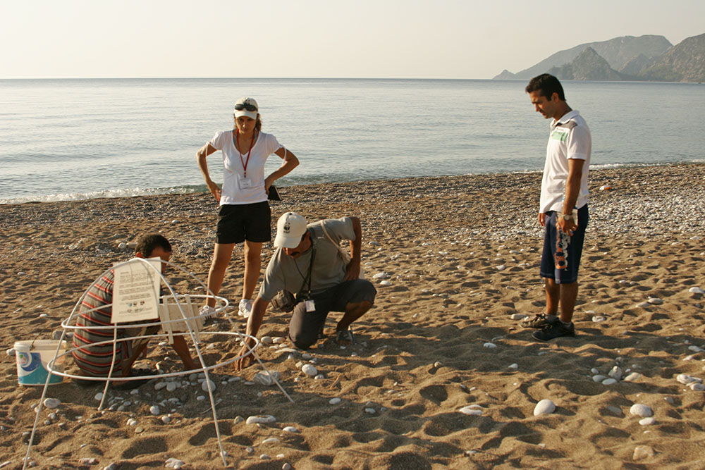 Turkey_Cirali_WWF_Caretta_caretta4