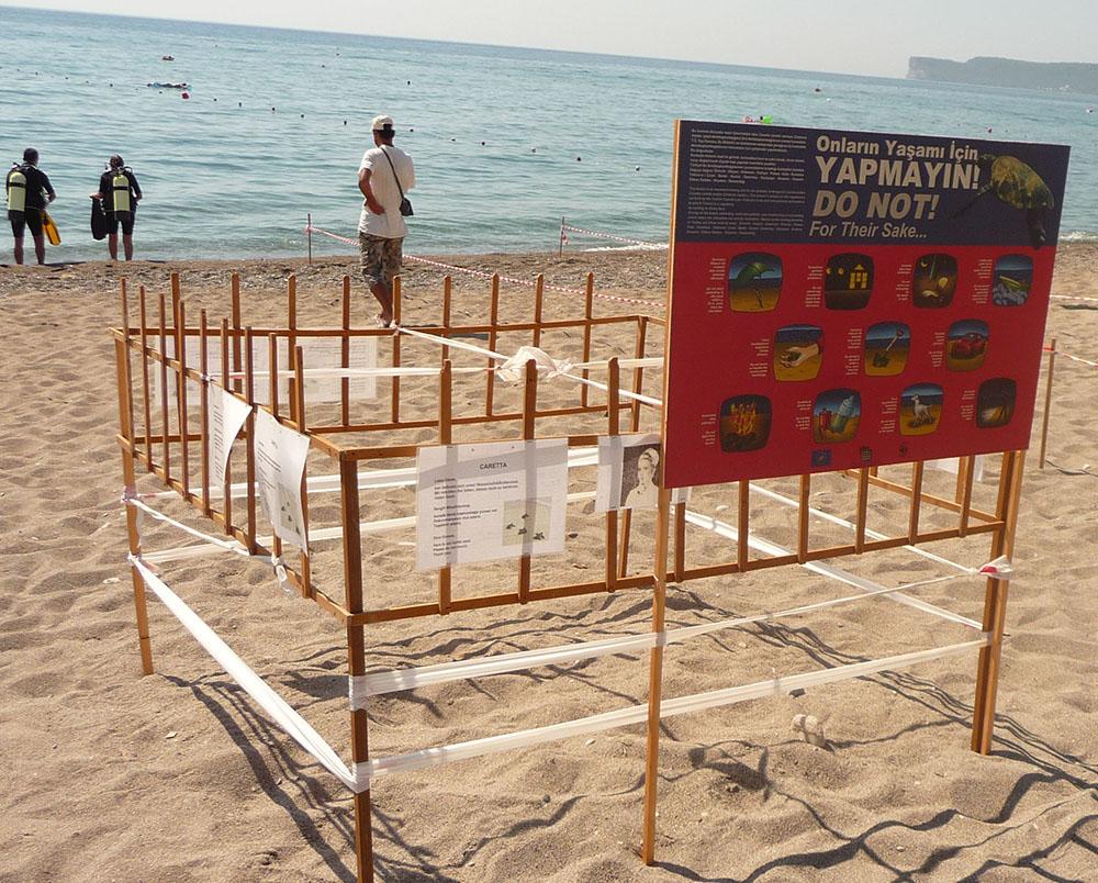 Turkey_Cirali_WWF_Caretta_caretta8