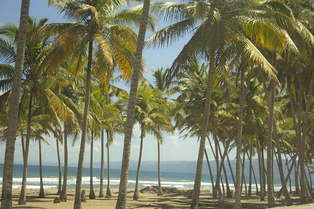 Dominican Republic_Beach_Coconut trees