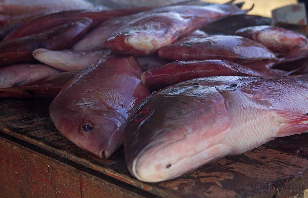 Dominican Republic_Fish